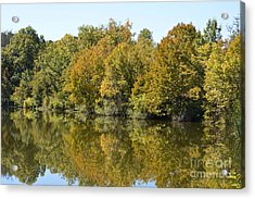 Trees Starting To Have Color  Acrylic Print by Ruth  Housley