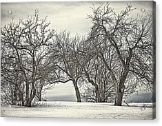 Trees Trees Trees Acrylic Print by Gary Smith