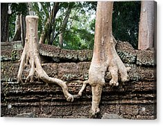 Trees United Acrylic Print by Artur Bogacki