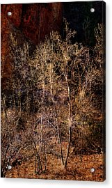 Acrylic Print featuring the photograph Trees West Fork Trail by Bob Coates