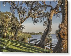 Acrylic Print featuring the photograph Trees With A View by Jane Luxton