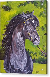 Acrylic Print featuring the painting Trenewydd King Flyer by Janina  Suuronen