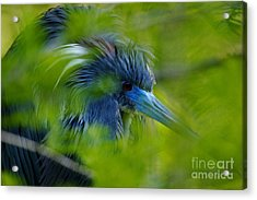 Acrylic Print featuring the photograph Tri-colored Heron Concealed    by John F Tsumas
