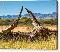 Acrylic Print featuring the photograph Triangle by Beverly Parks