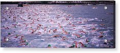 Triathlon Athletes Swimming In Water Acrylic Print by Panoramic Images