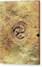 Tribrachidium Fossil Acrylic Print
