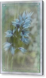 Acrylic Print featuring the photograph Tricia by Elaine Teague