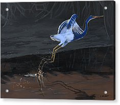 Tricolored Heron Acrylic Print by Kirsten Wahlquist