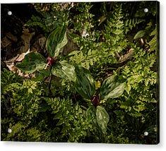 Trilium And Ferns Acrylic Print by Jeffrey Frazier