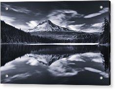 Trillium Escape Monochrome Acrylic Print by Darren  White