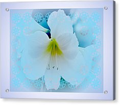 White Lily Acrylic Print by Larry Capra