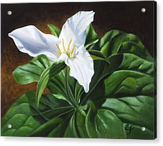 Trillium - Oil Painting On Canvas Acrylic Print