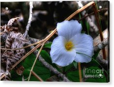 Acrylic Print featuring the photograph Trillium On County C by Trey Foerster