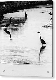 Trilogy - Black And White Acrylic Print