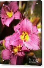 Triple Lilies Acrylic Print