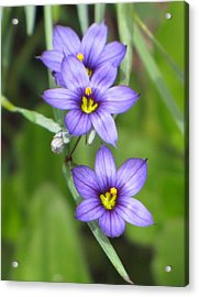 Triple Purple Acrylic Print