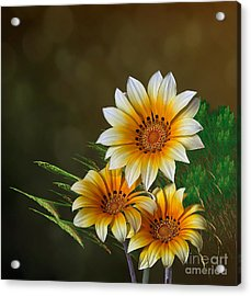 Triple Sunshine Acrylic Print by Shirley Mangini