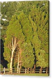 Triple Trees Acrylic Print by Debbie Nester