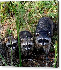 Acrylic Print featuring the photograph Triplets by Bob and Jan Shriner