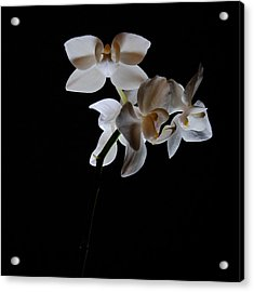Acrylic Print featuring the photograph Triplets II Color by Ron White
