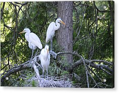 Acrylic Print featuring the photograph Triplets by Judith Morris