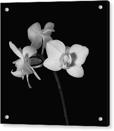Acrylic Print featuring the photograph Triplets by Ron White