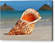 Tritan Trumpet On Lanikai Beach Acrylic Print