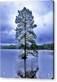 The Healing Tree - Trap Pond State Park Delaware Acrylic Print