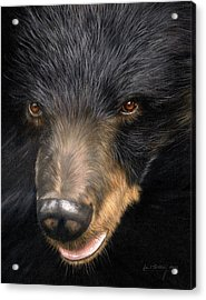 Trixie Moon Bear - In Support Of Animals Asia Acrylic Print by David Stribbling