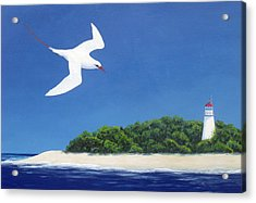 Tropic Bird And Light House Acrylic Print