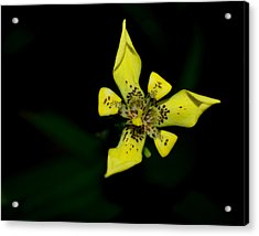 Acrylic Print featuring the photograph Tropic Yellow by Miguel Winterpacht