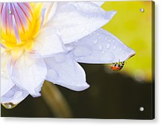 Acrylic Print featuring the photograph Tropical Adventure by Priya Ghose