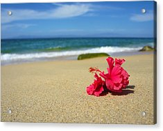 Tropical Beach Flower Acrylic Print by Aged Pixel
