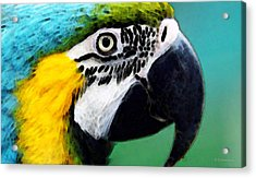 Tropical Bird - Colorful Macaw Acrylic Print by Sharon Cummings
