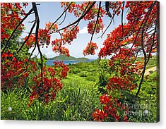Tropical Bloom Acrylic Print by George Oze