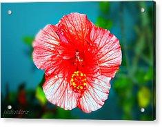 Tropical Burst Redux Acrylic Print