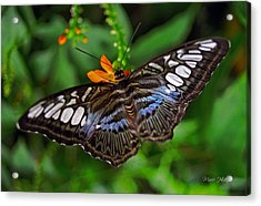 Acrylic Print featuring the photograph Tropical Butterfly by Marie Hicks
