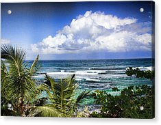 Tropical Dreams Acrylic Print by Daniel Sheldon