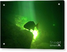 Tropical Fish Shilouette In A Cenote Acrylic Print