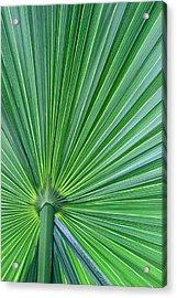 Tropical Leaf Acrylic Print by Carolyn Stagger Cokley