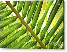 Tropical Leaf Acrylic Print by Elena Elisseeva