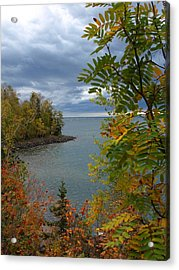Tropical Mountain Ash Acrylic Print
