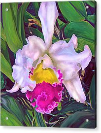 Tropical Orchid Acrylic Print by Jane Schnetlage