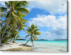 Tropical Beach With Hanging Palm Trees In The Pacific Acrylic Print