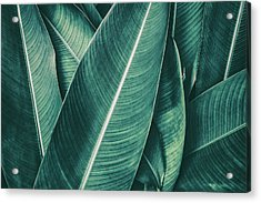 Tropical Palm Leaf, Dark Green Toned Acrylic Print by Pernsanitfoto