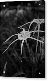 Acrylic Print featuring the photograph Tropical Paradise by Miguel Winterpacht