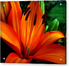 Tropical Passion Acrylic Print by Karen Wiles