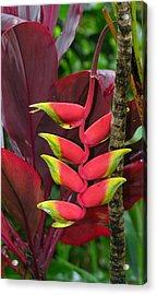 Tropical Plant Acrylic Print