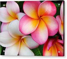 Tropical Plumeria Acrylic Print