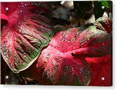 Tropical Rain - Botanical Art By Sharon Cummings Acrylic Print by Sharon Cummings